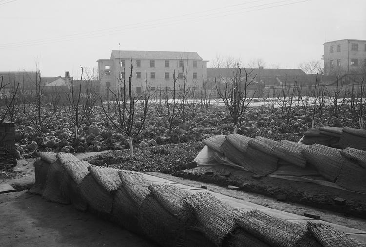 Urban garden in China